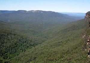 Тропические леса Австралии