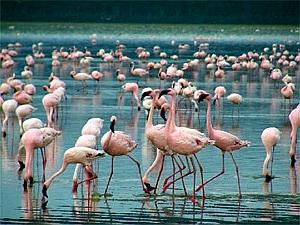 Фламинго на Корфу