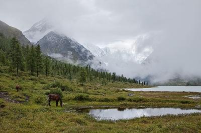 Алтай Природный парк Белуха